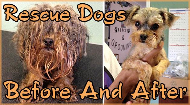 傷だらけの犬の救助前と救助後の姿を撮影した写真集