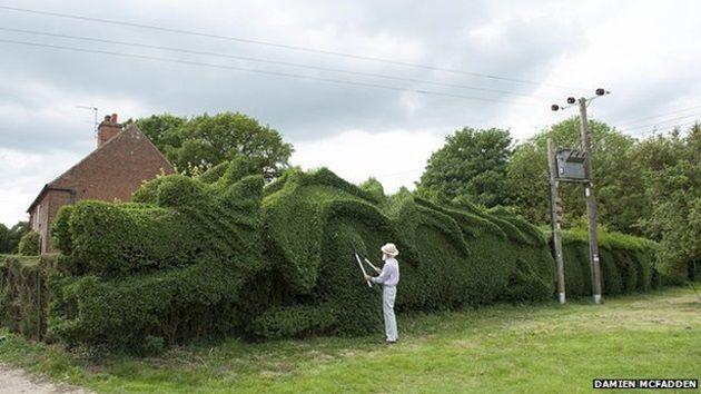 dragon-hedge-5