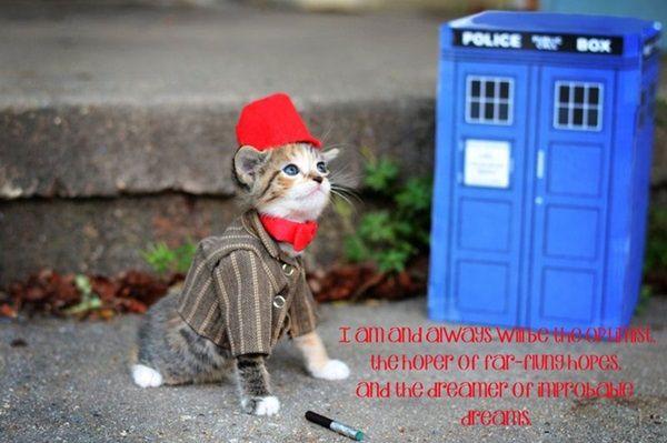des-chatons-deguises-en-personnages-de-la-pop-culture12