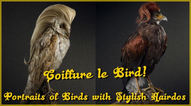 非の打ち所がないほど素晴らしいヘアスタイルの鳥類たち