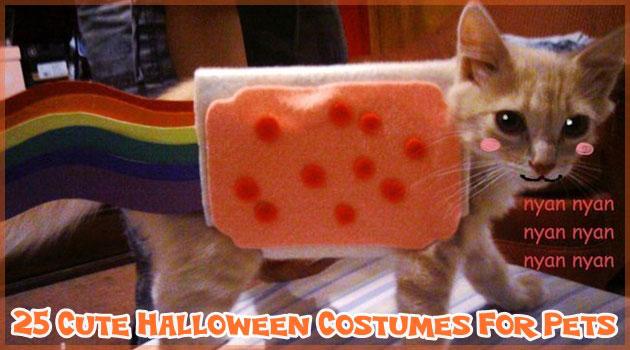 ハロウィンのための創造的でいて面白いペット衣装集!