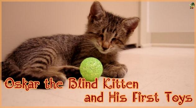 盲目の子猫に初めてボールのおもちゃを与えてみると