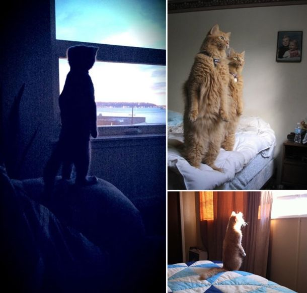 standing-cats13