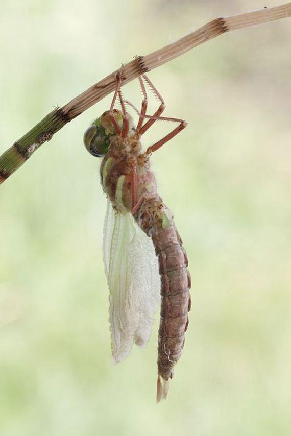 08-birth_dragonfly