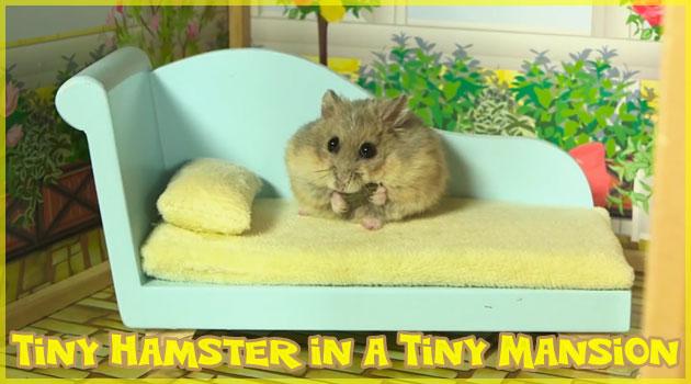 小さなマンションを探索する小さなハムスターの癒し動画
