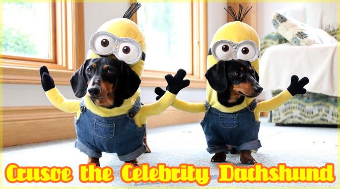 キュートなコスプレ犬のクルーソーとオークリーの人気動画シリーズ!