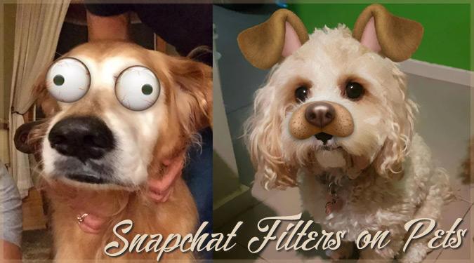 ペットの動物にスナップチャットのフィルターを使用した写真シリーズ