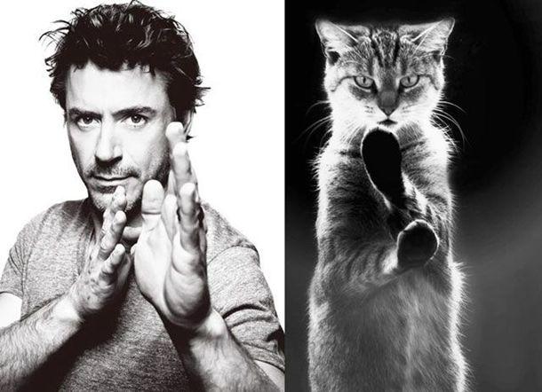 1384788390_cats_vs_models_05