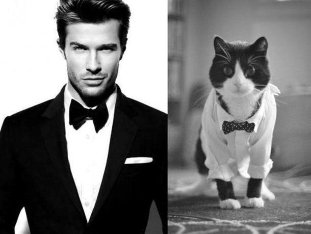 1384788318_cats_vs_models_01