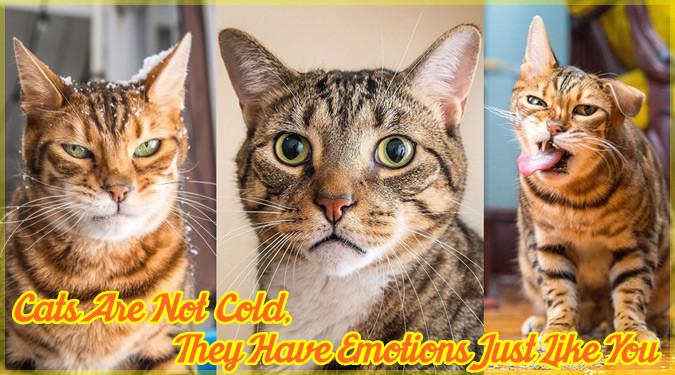 ネコの様々な感情を示した15枚のユニークな写真集!