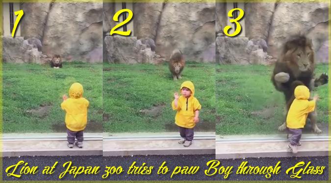 ライオンに背中を向けちゃダメ?男の子に飛び掛るライオンが話題に!