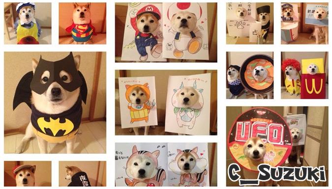 ツイッターで人気のコスプレ犬!柴犬のSくんとHちゃんの写真集!
