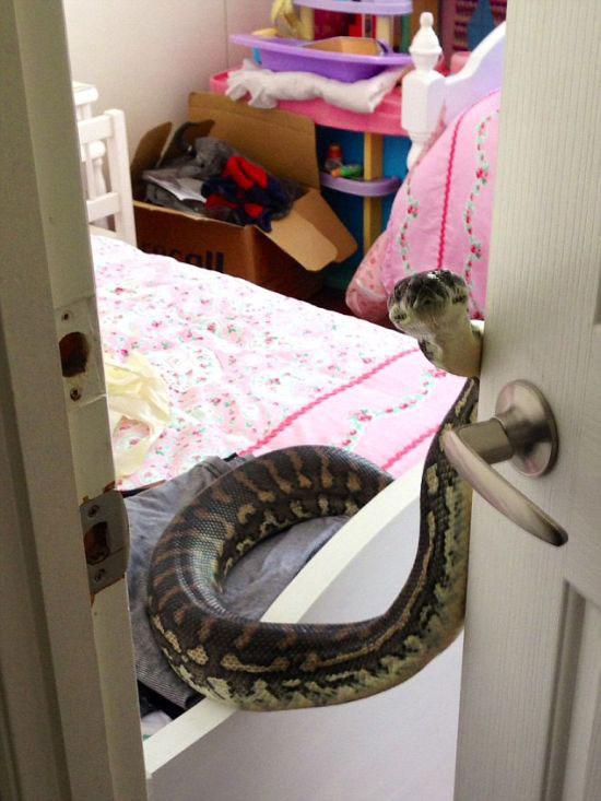 surprise_snake_05