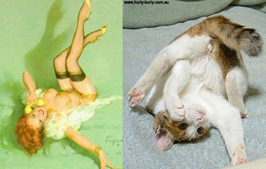 cats-model-pinup-girls-8%255B2%255D