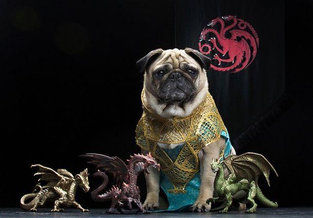 pugs-of-westeros-5