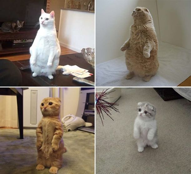 standing-cats11
