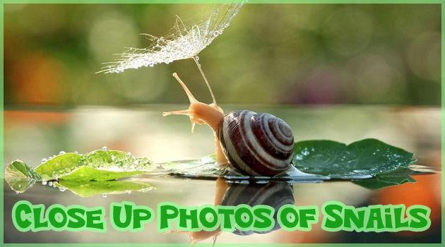 カタツムリの生活を撮影した神秘的で美しい写真集!