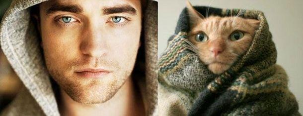 1384788364_cats_vs_models_10