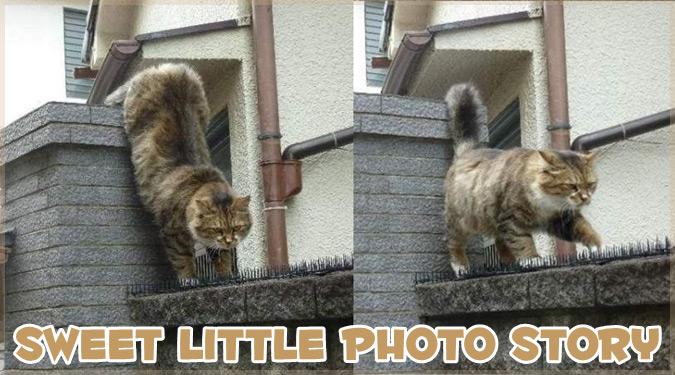 ネコが危険を冒してまでトゲの上を進む理由とは?真の愛のストーリー