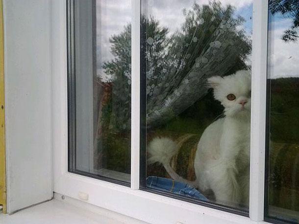 cat_rescue_17