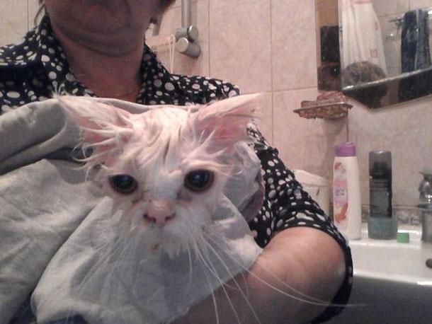 cat_rescue_06