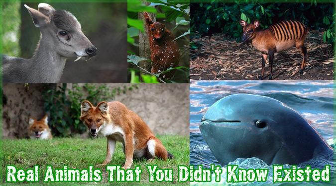 世界的にあまり知られていないエキゾチックな20匹の動物たち!