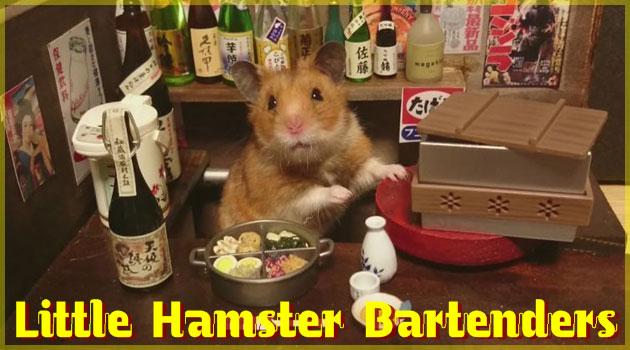 居酒屋を経営するハムスターの写真が世界で話題沸騰中!