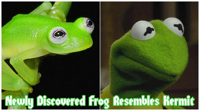 新しく発見されたカエルがサセミストリートのカーミットだと話題に!