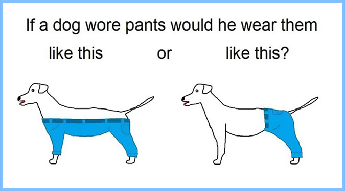 犬はどのようにパンツを履くの?じゃあ他の動物は?ネット民を揺るがす謎!