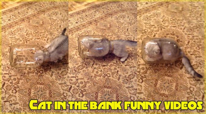 出入り口が一つの小さな瓶の中に入り込んだネコさんの脱出劇!