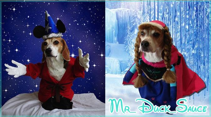 ディズニーの人気キャラクターに扮したキュートなワンちゃんの写真集