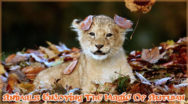 秋を楽しむ無邪気な動物たちの15枚の写真集!