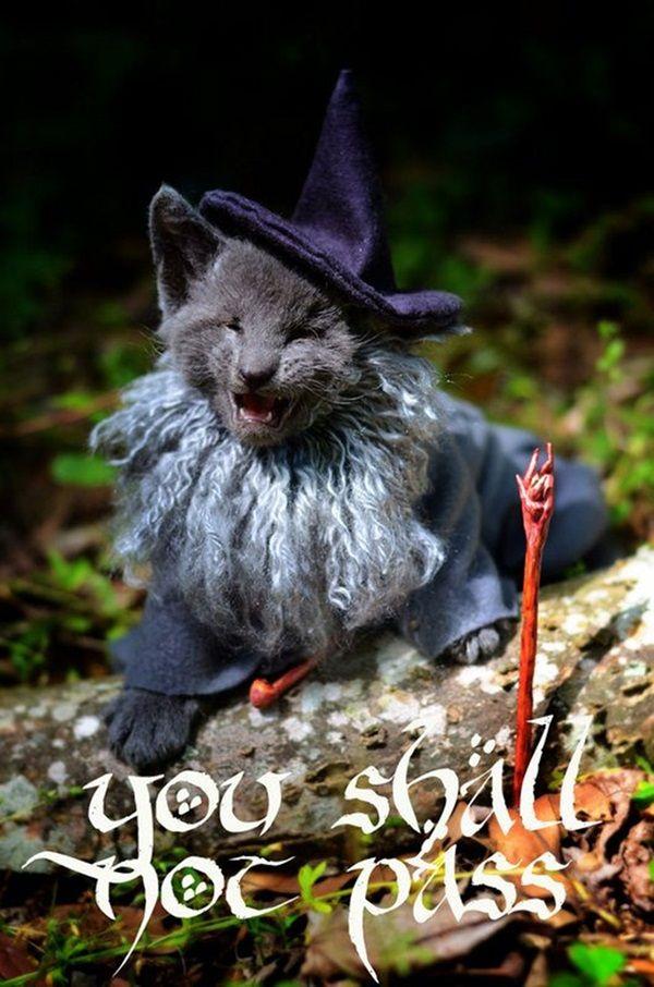 des-chatons-deguises-en-personnages-de-la-pop-culture6