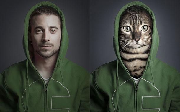 cat-christoph_2961525k-1