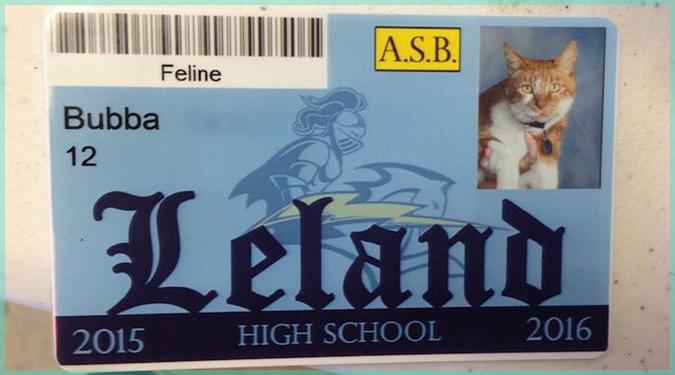 カリフォルニア州の高校に通う勤勉猫さん!公式の学生証も発行!